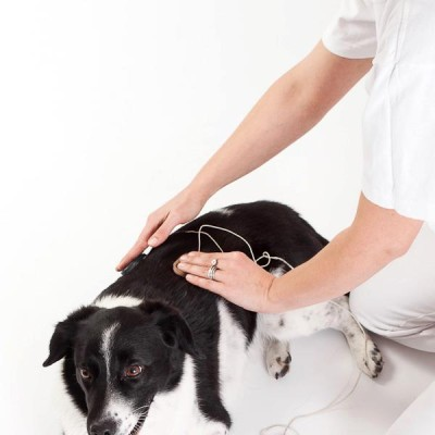 Ebfizio - Fizioterapia