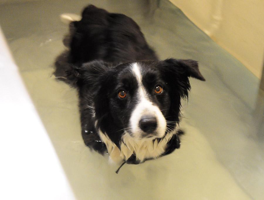 Ebfizio - Hidroterapia
