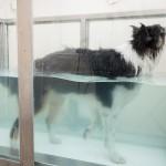 ebfizio-hidroterapia51