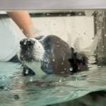 ebfizio-hidroterapia60