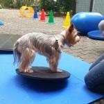ebfizio-kutyafitness58