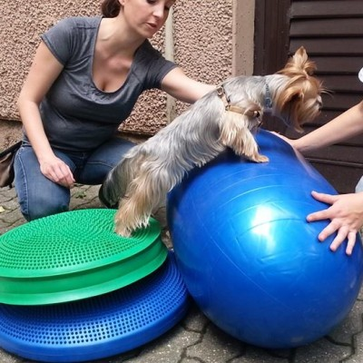 Ebfizio - Kutya-Fitness