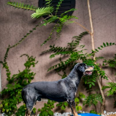 kutyafoto.mintafoto-MOMO-9664